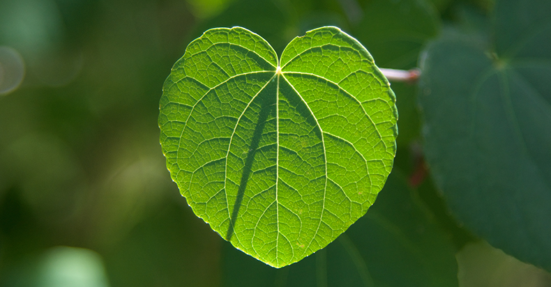 Radiate from Essence of your heart